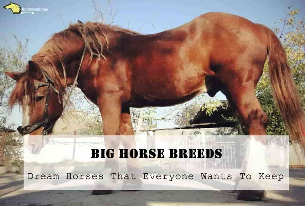7 Big Horse Breeds Dream Horses That Everyone Wants To Keep 2020